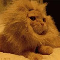 灬小狮子灬